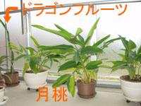 亜熱帯の植物